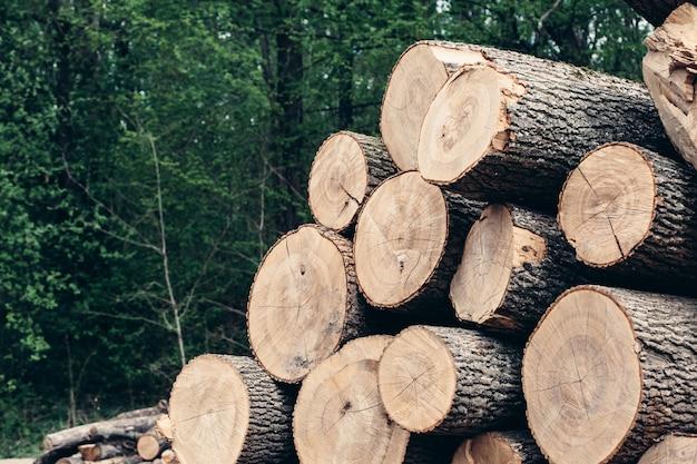 Un ceppo di legno