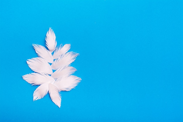 Un cespuglio di foglie di frangia di carta bianca ritagliata su uno sfondo di cartone blu. vista dall'alto. copia spazio