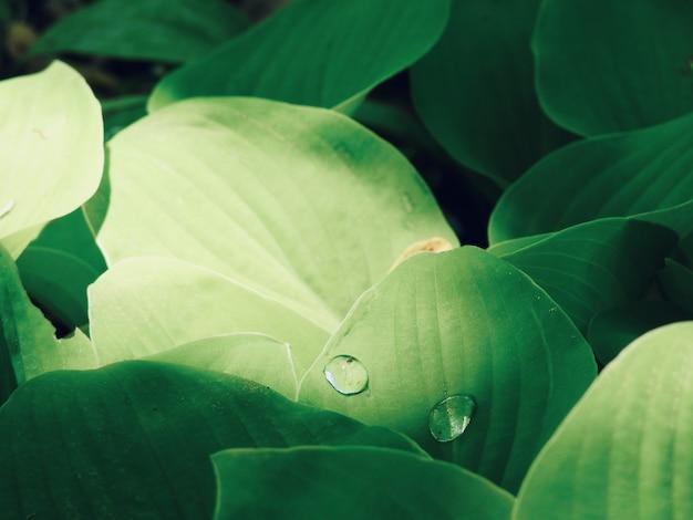Un colpo del primo piano di due gocce dell'acqua su una foglia verde durante il giorno
