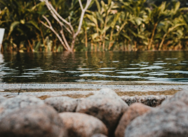 Un colpo di un lago con rocce di fronte e verde