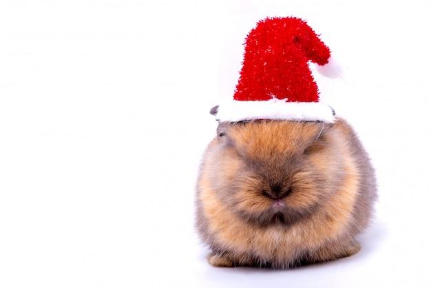 Un coniglio carino con soffice pelliccia e corpo tondo grasso che indossa un cappello rosso di natale su sfondo bianco