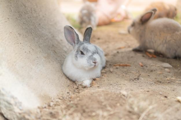Un coniglio grigio e bianco sdraiato per terra