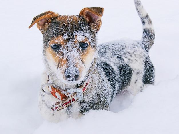 Un cucciolo coperto di neve con un collare guarda avanti, una giornata invernale