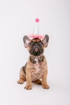 Un cucciolo di bulldog francese in un cappello compleanno si siede su uno sfondo bianco