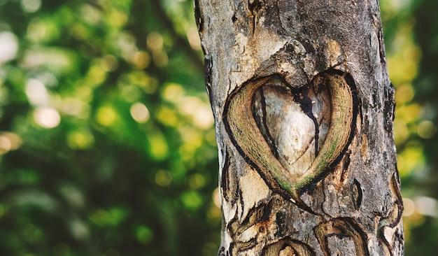 Un cuore scolpito nell'albero