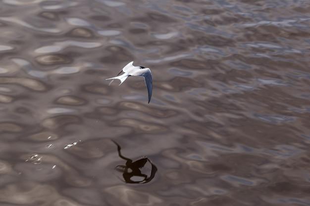 Un gabbiano vola sopra l'acqua