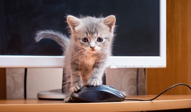 Un gattino in piedi su un topo