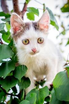Un gattino maculato bianco si siede su un albero tra le foglie verdi