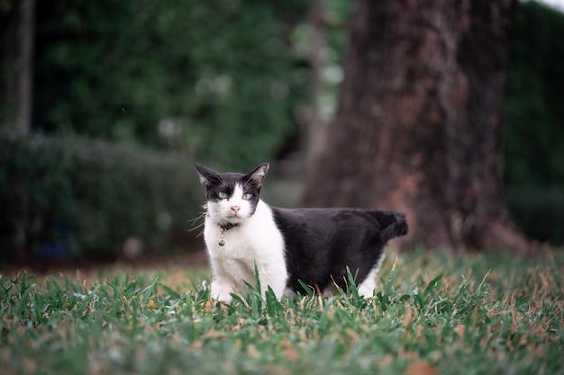 Un gatto bianco e nero sta giocando sul campo verde. sembra intelligente e attivo. è seduto in giardino.