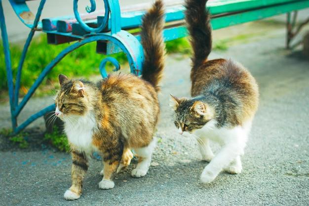Un gatto domestico sveglio lanuginoso bianco marrone grigio all'aperto o nel parco