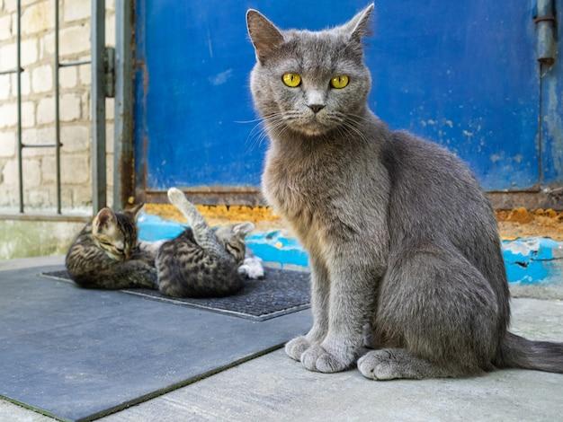 Un gatto e i suoi cuccioli siedono sulla soglia della porta. il gatto guarda i gattini che sono ancora giovani