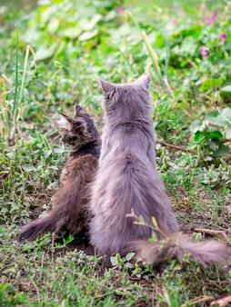Un gatto e un gattino si siedono sull'erba, una vista posteriore