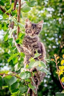 Un gatto giovane, a strisce e irrequieto si siede su un ramo di un albero