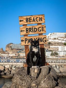 Un gatto randagio in posa su un ceppo di albero di fronte a un cartello che punta sulla spiaggia di puerto rico, gran canaria in spagna