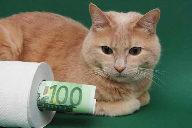 Un gatto rosso giace accanto a un rotolo di carta igienica bianca su una parete verde. una banconota da 100 euro spunta da un rotolo di carta igienica.