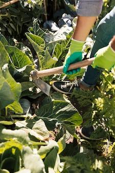 Un giardiniere che lavora nell'orto con la zappa