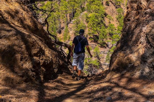 Un giovane uomo che cammina in un tunnel di alberi naturali durante il trekking verso la cima di la cumbrecita vicino alle montagne della caldera de taburiente, isola di la palma, isole canarie, spagna