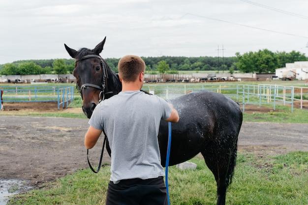 Un giovane uomo lava un cavallo purosangue con un tubo flessibile in una giornata estiva al ranch. zootecnia e allevamento di cavalli.