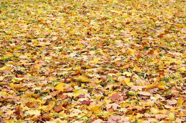 Un gran numero di foglie autunnali cadute e ingiallite sul terreno. trama di sfondo autunnale