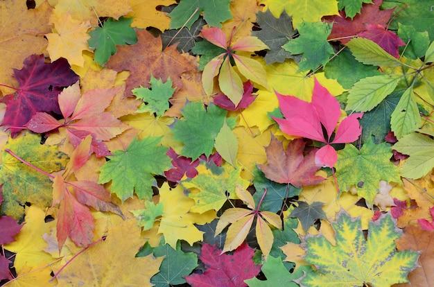 Un gran numero di foglie autunnali cadute e ingiallite