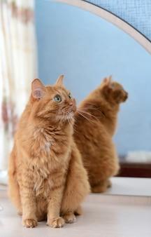 Un grande gatto allo zenzero accanto allo specchio