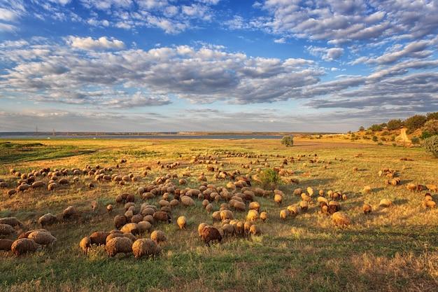 Un gregge di pecore al pascolo nel prato, contro il cielo con le nuvole e il lago