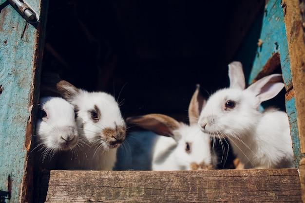 Un gruppo di giovani conigli nella conigliera