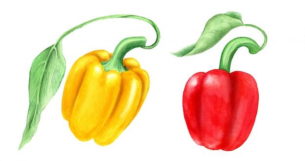 Un insieme di due peperoni dolci gialli e rossi con le foglie verdi ha isolato l'illustrazione dell'acquerello adatta a progettazione dell'alimento
