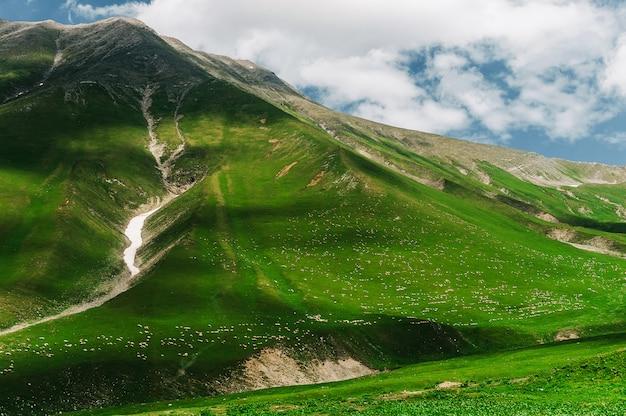 Un milione di pecore camminano tra le verdi montagne del caucaso, in georgia. splendida vista con animali nella natura selvaggia. fenditura di montagna con neve.