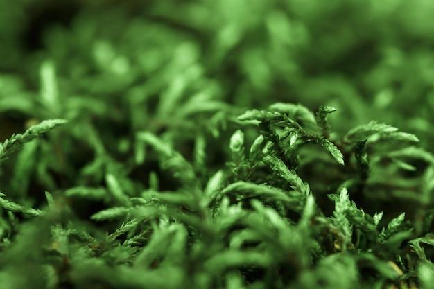 Un modello di muschio verde