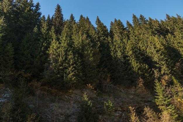 Un muro della foresta verde