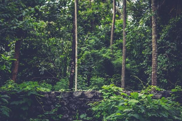 Un muro di mattoni che racchiude una foresta