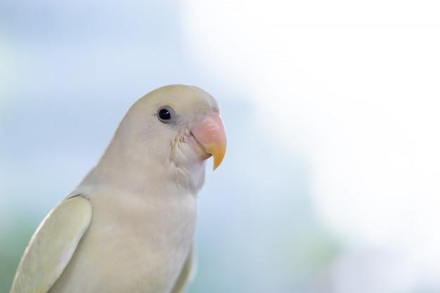 Un pappagallo bianco in piedi chiuso faccia