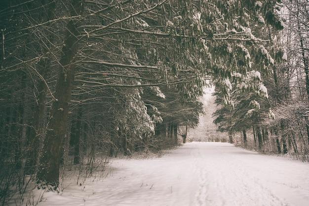 Un parco invernale con alberi coperti di neve
