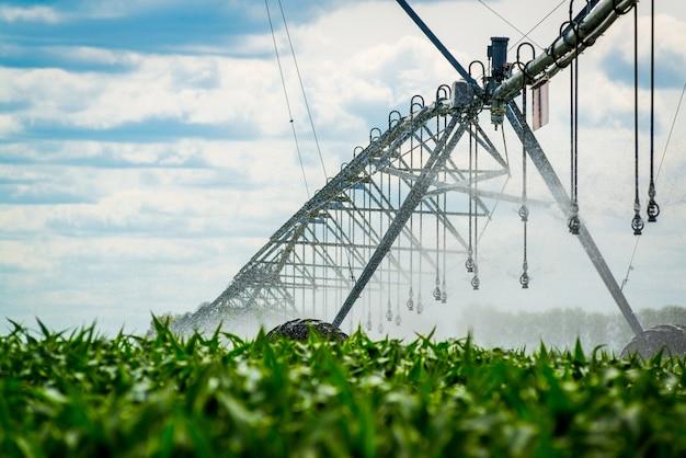 Un perno di irrigazione che innaffia un campo