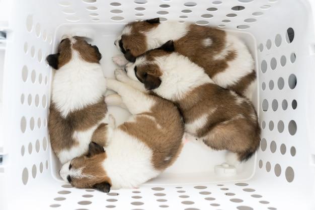 Un piccolo cane di sonno del cucciolo nel cestino