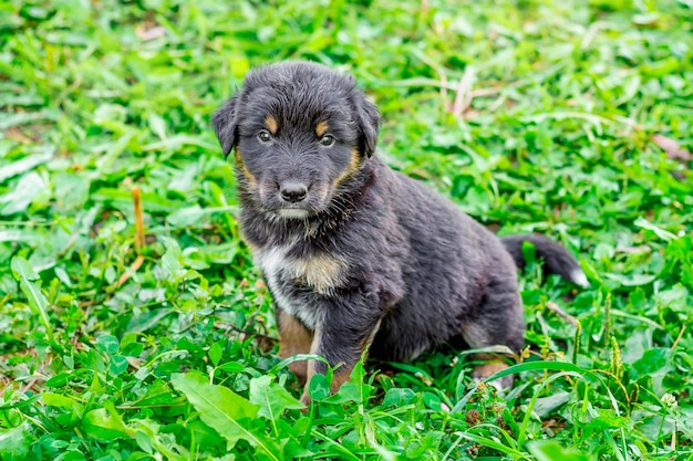 Un piccolo cucciolo nero si siede su un'erba verde
