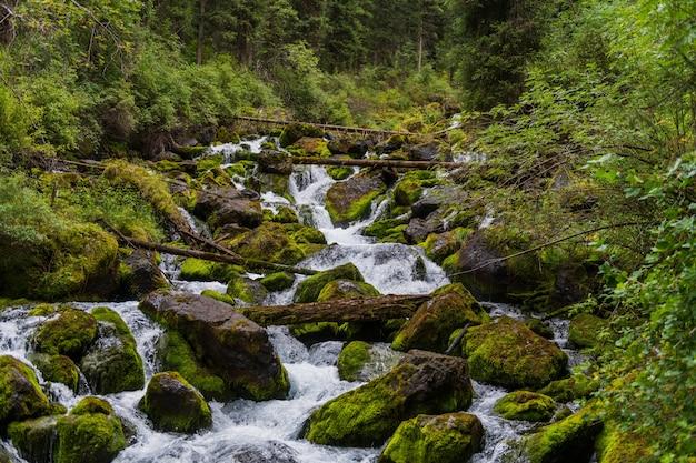 Un piccolo fiume nella foresta in estate