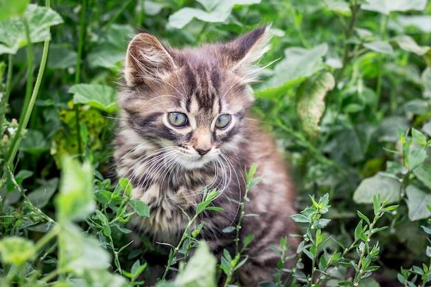 Un piccolo gattino a strisce si siede in un'erba verde alta