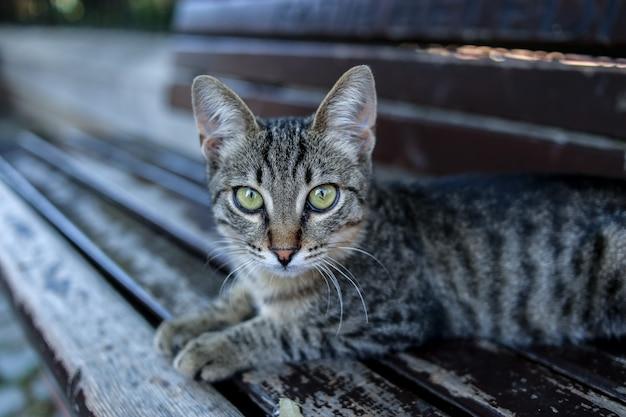 Un piccolo gattino a strisce su una panchina. tacchino. istanbul