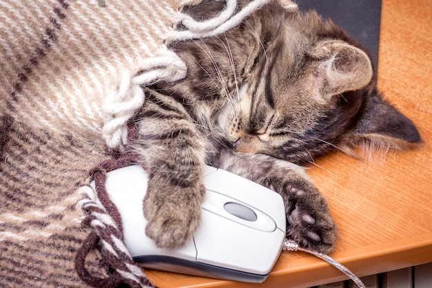 Un piccolo gatto dorme abbracciando un mouse del computer