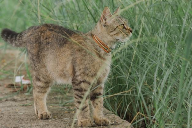 Un piccolo gatto grigio in piedi guardando qualcosa sul davanti.