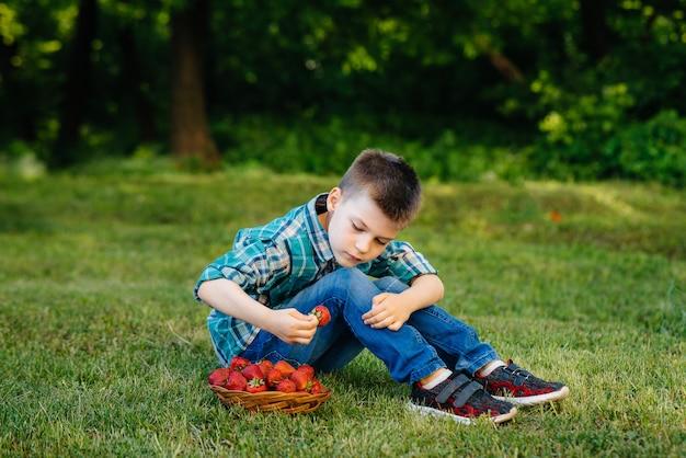 Un piccolo ragazzo carino è seduto con una grande scatola di fragole mature e deliziose.