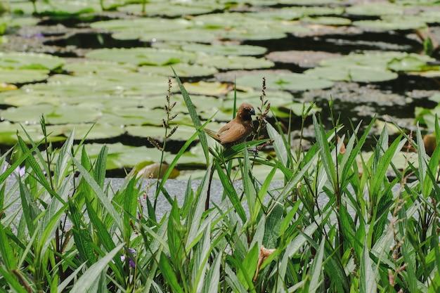 Un piccolo uccello con nenuphar in un giardino botanico