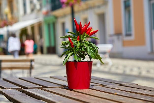Un piccolo vaso di plastica color corniola con peperoncini di fuoco rosso fuoco naturali luminosi decora un tavolo di legno marrone in un caffè all'aperto in una luminosa giornata di sole. simbolo di caldo, caldo. blur. messa a fuoco selettiva.