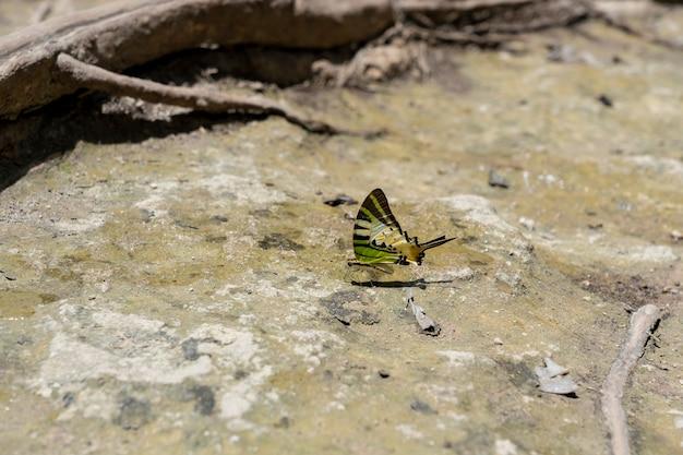 Un primo piano della farfalla di bellezza che riposa sulla terra