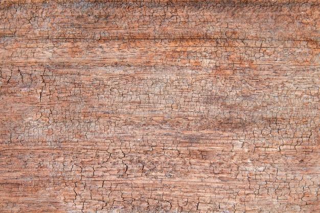 Un primo piano della superficie del vecchio taglio dell'albero