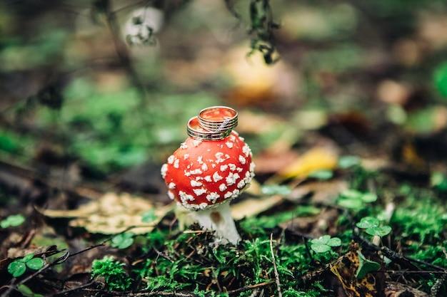 Un primo piano di due bei anelli dorati si trova su un cappello di un fungo macchiato rosso su un fondo vago della foresta, fuoco selettivo