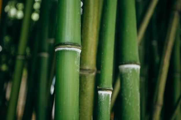 Un primo piano di steli di piante verdi. macrofotografia