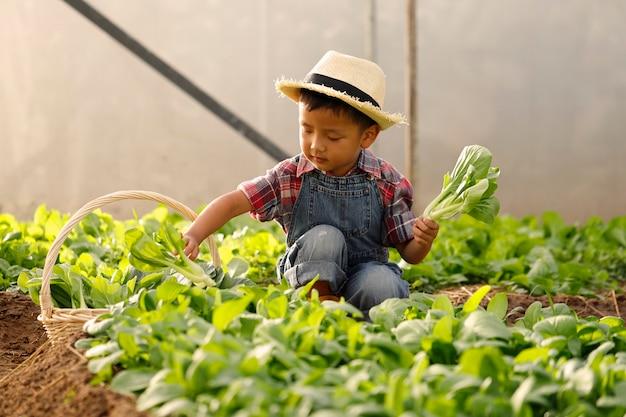 Un ragazzo asiatico sta raccogliendo verdure da un complotto in una casa biologica.